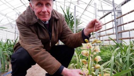 «Это была мечта моей жизни! В теплице уже сто кустов». В посёлке под Гомелем 71-летний пенсионер выращивает орхидеи