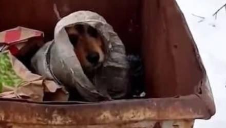 В деревне под Гомелем люди нашли в мусорке собаку в мешке. Теперь псу ищут дом