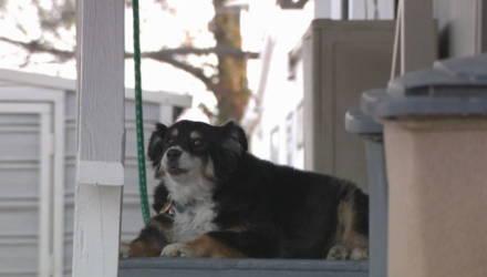 В США собака унаследовала 5 миллионов долларов после смерти хозяина-бизнесмена — он включил её в завещание