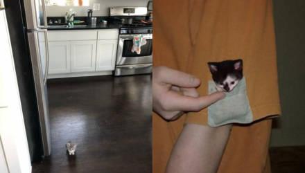 В Сети обнаружили самых маленьких котят, чей размер больше похож на фотошоп: 10 умилительных фото