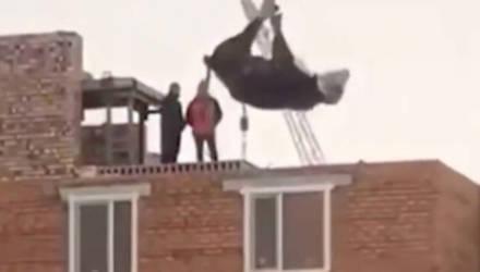 Рабочие подвесили корову над крышей дома и возмутили Сеть