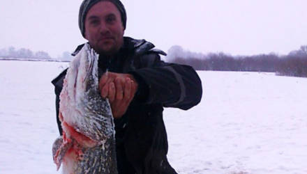 До лунки тянул полчаса. В Рогачёвском районе мужчина поймал щуку весом почти 24 кг