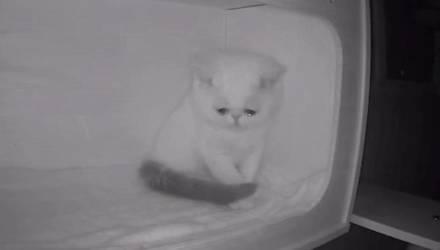 Камера наблюдения сняла безумно грустные кадры, когда котёнок увидел, что остался один без хозяев