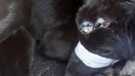 Шокирующая история: на Гомельщине собаке проломили череп и вырвали нос. Волонтёры просят помощи в поиске виновного
