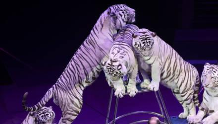 """В гомельском цирке представлена новая программа """"Люди! Звери! Сенсация!"""""""