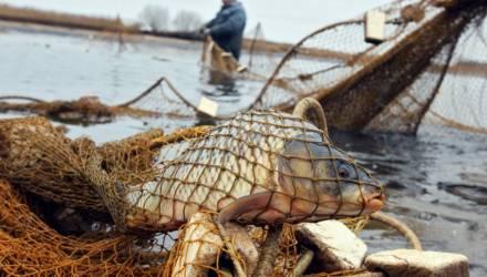 Гомельчанин с товарищем вблизи посёлка Смелый наловили сетями 575 рыб, а затем лишились денег и автомобилей