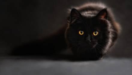 В Украине кот стал причиной смерти 4-месячного ребёнка