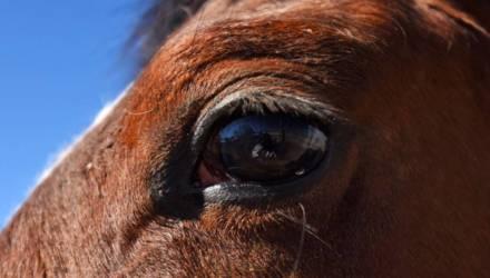 Зачем в коня корм. Под Гомелем сто лет выращивают лошадей, но уже не знают точно для чего
