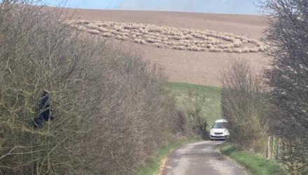 В Англии сотни овец выстроились в правильные круги, поставив в тупик экспертов