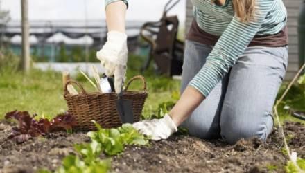 Самые удачные дни – 13-15 апреля. Лунный календарь садовода-огородника на апрель