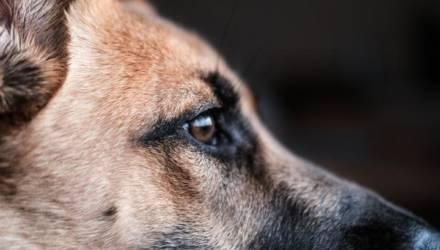 «Начинали с нестандартного вызова». Почитайте, как работает в Гомеле частный крематорий для домашних животных