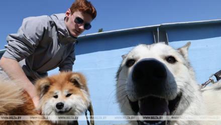 Областная выставка охотничьих собак прошла в Гомеле
