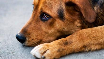 Под Гомелем собаке проломили позвоночник, а коту сломали рёбра. Возбуждено уголовное дело