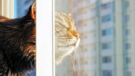 В квартирах гомельчан начали отключать отопление