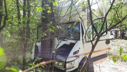 «На дорогу внезапно выбежал лось…» Ехавший из Гомеля в Жлобин грузовик врезался в дерево