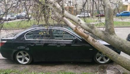 В Гомельской области из-за сильного ветра падали деревья
