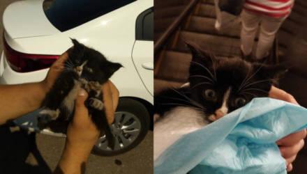 Девушка показала, как у неё преобразился котёнок, которого спасли из-под капота авто