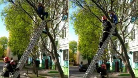 Не только котики. В Гомеле спасатели снимали с дерева 12-летнюю школьницу