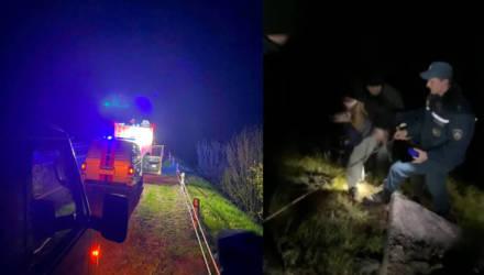 В лесу под Гомелем потерялась семья с двумя детьми