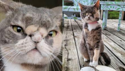 Котёнка собирались усыпить из-за плоского носа, но стоило в него поверить, и он покорил весь мир