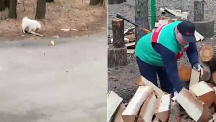 Лукашенко нарубил дров в Гомельской области