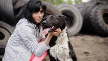 Ветеринар гомельской ветклиники спас Вилли жизнь. Что сейчас с псом и ищут ли живодёра