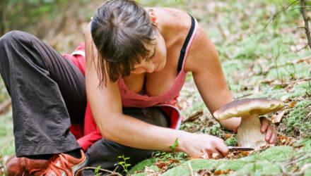 Грибы собирать можно, но... Ограничение на посещение лесов введено в трёх районах Гомельской области