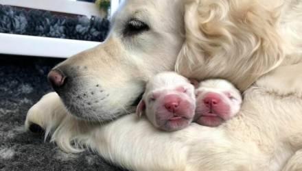 15 фото собак, которые стали мамами и теперь буквально сияют от счастья рядом со своими щеночками