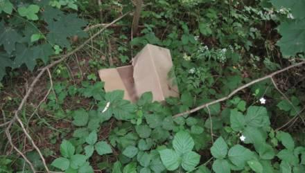 На Гомельщине женщина родила девочку и оставила умирать в лесу в коробке