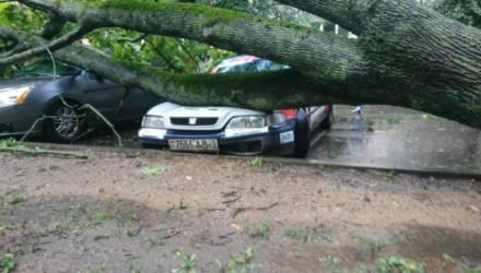 В Гомеле на машину упало дерево. Можно ли получить компенсацию?