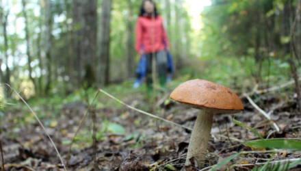 Что происходит с организмом, когда вы едите грибы?