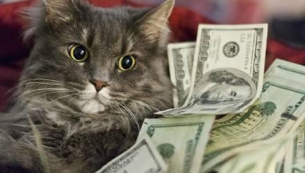 Деньги будут сыпаться рекой: этим знакам Зодиака повезет с финансами в сентябре