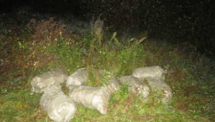 Трое безработных гомельчан (включая девушку) попались на краже лука в фермерском хозяйстве