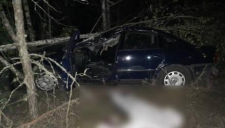 На Гомельщине лось выбежал на дорогу – водитель погиб