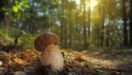 В Гомельской области ищут двух пропавших в лесах грибников