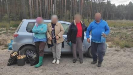 На Гомельщине нашлись три женщины и мужчина, которые пошли в лес за грибами и заблудились