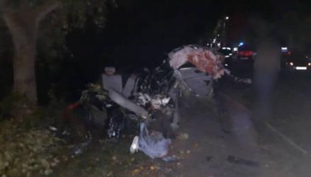 В Светлогорске водитель BMW не справился с управлением и врезался в дерево: погибли двое